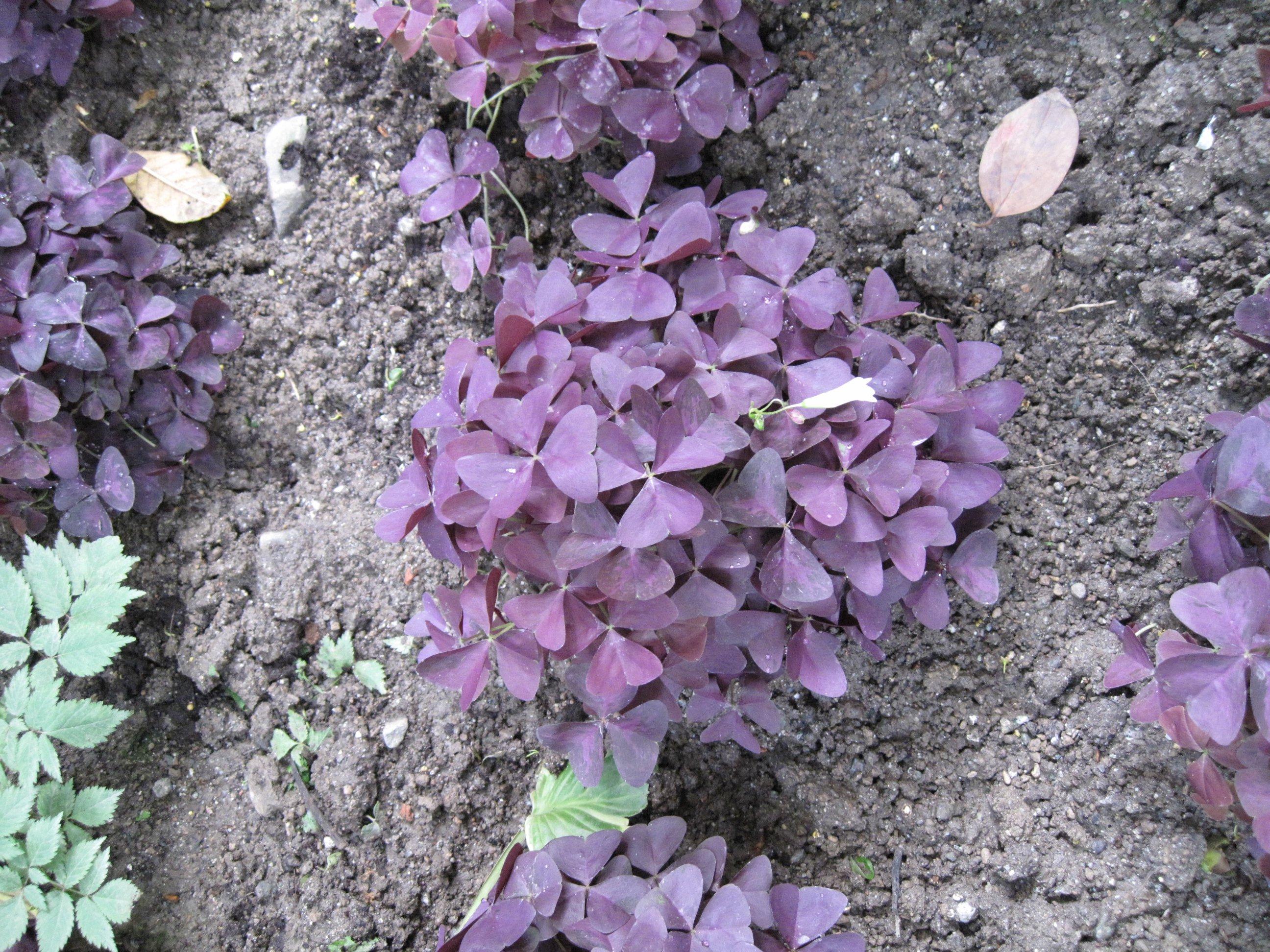 gärten von schloß trauttmansdorff - pflanzenbestimmung